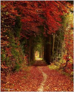 This 'Tree Tunnel in Bavaria, Germany' has  Mystery & beauty combined.