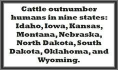 . Cattle Farming, Livestock, Nebraska, Oklahoma, Kansas, Dairy Cattle, Show Cattle, Animal Agriculture, Animal Science