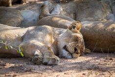 Tangala Safari Camp| Specials 4 Africa
