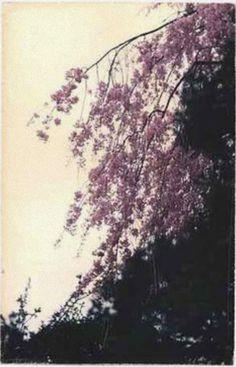 _Masao Yamamoto (Japanese 1957- ) • Colors