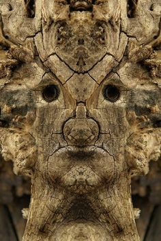 Italian photographer Elido Turco uses simple photo-editing tricks to transform forest trees into mythical creatures. Forest Creatures, Mythical Creatures, Green Man, Peter Wohlleben, Tree Faces, Nature Spirits, Hidden Face, Tree Photography, Conceptual Photography