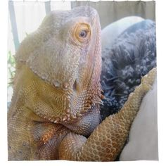 Shop Cute Bearded Dragon up Close Picture Shower Curtain created by HappyGabby. Funny Shower Curtains, Custom Shower Curtains, Cute Lizard, Bearded Dragon Cute, Beard Humor, Dragon Print, Dragon Pictures, Reptiles, Image