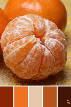 ZJ Colour Palette 153 #colourpalette #colourinspiration