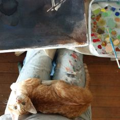 My cat and I ready to start the painting process Ready To Start, Painting Process, Cats, Gatos, Cat, Kitty, Kitty Cats