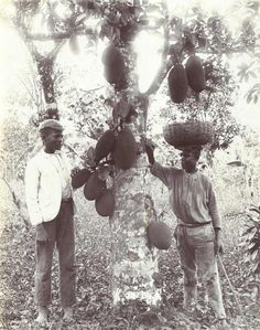 Jamaica as it used to be - Telegraph