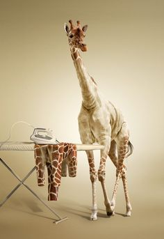 ironing of giraffe