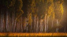 Enchant forest by Marat Akhmetvaleev on 500px