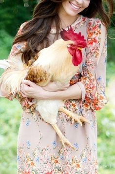 chicken pict
