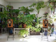 B&W 805Dと観葉植物の午前中 : 庭日和