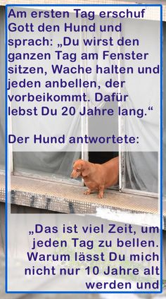 Als Gott den Menschen erschuf, wurde er gierig. Quand Dieu a créé l'homme, il est devenu gourmand. Funny Tweets, Funny Jokes, Joke Of The Day, Funny Animal Memes, Animal Humor, Retro Humor, Funny Quotes About Life, Prayer And Fasting, Funny Photos