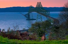 love going over this bridge, it is 3miles long and connects Washington and or.  it leads to some really neat places