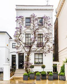 A stunning house in London's Kensington covered in wisteria vines. A stunning house in London's Kensington covered in wisteria vines. London Townhouse, London House, Apartments In London, London Apartment Interior, Kensington And Chelsea, Kensington London, Chelsea London, Kensington House, Exterior Design