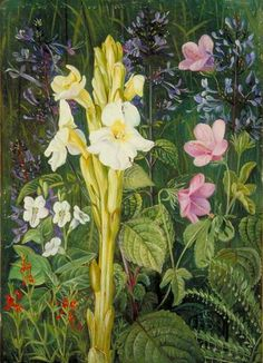 Cape Colours by Marianne North; c. 1882; Oil on board; Collection:Royal Botanic Gardens, Kew, Surrey, England