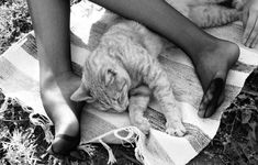 Turtle Names, Cat Names, Photo Credit, Art Photography, Animals, Gatos, Fine Art Photography, Animales, Animaux