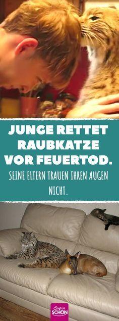 Christel Nehls (christelnehls) on Pinterest - gartenplanung software kostenlos deutsch