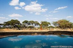 Sanctuary Swala - Overlooking a water hole in a secluded area of Tarangire National Park, this pool offers views of elephants and rare kudu antelopes against a backdrop of Africa's dramatic baobab trees.
