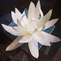 Giant paper flowers found on: @Lora Lora Avedian