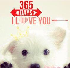 #iloveyou amo a mi perro