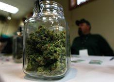 Can My Medical Marijuana Make Me Loose My Job? - Florida Marijuana Laws #marijuanalaws #floridamarijuana #420andmyjob