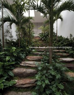 Tips On Urban Landscaping – My Best Rock Landscaping Ideas Tropical Garden Design, Tropical Landscaping, Garden Landscape Design, Landscaping With Rocks, Urban Landscape, Landscape Architecture, Backyard Landscaping, Landscaping Ideas, Garden Steps
