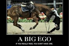 A horse which stops dead just before a jump and thus propels its rider into a graceful arc provides a splendid excuse for general merriment. ~Duke of Endinburgh Equestrian Memes, Horse Girl Problems, Inspirational Horse Quotes, Funny Horses, Funny Animals, Horse Pictures, Horse Love, Show Horses, Beautiful Horses