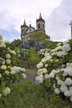 Farm of Santa Cruz Church of Our Lady of Lourdes, Azores, Portugal Bauernhof von Santa Cruz Church unserer Dame von Lourdes, Azoren, Portugal Portugal, Vacation Destinations, Vacation Spots, Church Of Our Lady, To Go, The Beautiful Country, Pilgrimage, Lisbon, Beautiful Landscapes
