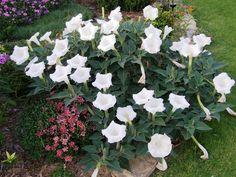 Najljepši miris cvijeća, Pijani Tvor, vrtlarstvo, ribolov, gastronomija, gastro, www.pijanitvor.com, vrt, biljke, ribe