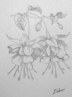 Learn To Draw A Realistic Rose - Drawing On Demand Art Floral, Watercolor Flowers, Watercolor Art, Lilies Drawing, Flower Line Drawings, Poses References, Flower Coloring Pages, Plant Drawing, Botanical Drawings