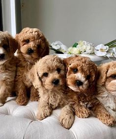 Dog And Puppies Small .Dog And Puppies Small Super Cute Puppies, Cute Baby Dogs, Cute Little Puppies, Cute Dogs And Puppies, Cute Little Animals, Cute Funny Animals, Pet Dogs, Pets, Doggies