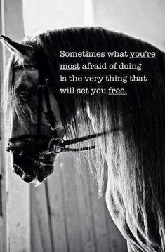 The most important role of equestrian clothing is for security Although horses can be trained they can be unforeseeable when provoked. Riders are susceptible while riding and handling horses, espec… Great Quotes, Me Quotes, Scary Quotes, Daily Quotes, Rodeo Quotes, Psych Quotes, Foto Cowgirl, Inspirational Horse Quotes, Motivational Quotes
