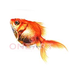 Drawing Realistic Fish Coloring Pages 23 Ideas Realistic Paintings, Realistic Drawings, Easy Drawings, Food Drawing, Drawing Ideas, Butterfly Painting, Beautiful Fish, Color Pencil Art, How To Draw Hair