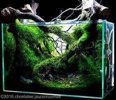 10 Tips on Designing a Freshwater Nature Aquarium Aquascaping, Aquarium Landscape, Nature Aquarium, Aquarium Terrarium, Planted Aquarium, Betta Tank, Betta Fish, Amazing Aquariums, Nano Tank