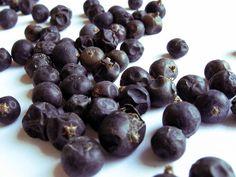 Juniper: Culinary and Medicinal Uses | Rushing River Botanicals
