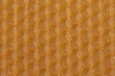 Výstava v ostravském Gongu představí módu inspirovanou včelami