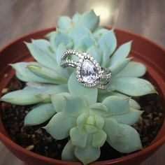 Unique pear-shaped diamond engagement ring paired with a succulent from a Los Angeles farmers market. DIAMONDMANSION.com
