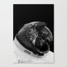 parrot astronaut Canvas Print by boxfox Surreal Artwork, Canvas Prints, Art Prints, Astronaut, Surrealism, Parrot, Originals, Modern Art, Photoshop