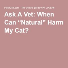 """Ask A Vet: When Can """"Natural"""" Harm My Cat?"""