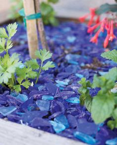 glass-mulch | garden | art | landscaping ideas | recycle | repurpose | reuse | colorful | unique