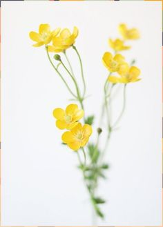 Artificial Buttercup Flowers in Yellow Fake Flowers, Small Flowers, Artificial Flowers, Wild Flowers, Fresh Flowers, Exotic Flowers, Purple Flowers, Tulip Bouquet, Flower Bouquet Wedding