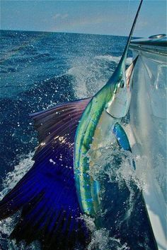Marlin fishing. Fond memories of a day well spent.