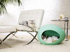 http://www.design-decor-staging.com/blog/contemporary-cat-small-dog-house-designs/35109