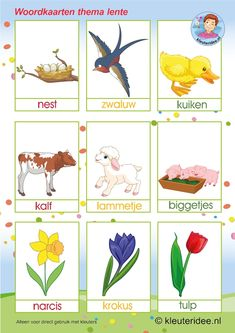 Spring words with pictures spring theme, kindergarten expert, free printable Spring Images, Spring Pictures, Learning Colors, Kids Learning, Kids Talent, Learn Dutch, Spring Words, Kindergarten Songs, Dutch Language