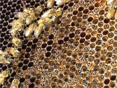 """Misconceptions and """"Rules for Successful Beekeeping"""