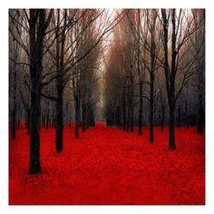 Art Print: Fiery Autumn by Tracey Telik : 13x13in