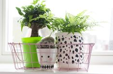 Plantjes in de kinderkamer #ogreen