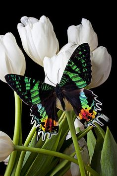 No expectations, no prejudgment. Like a butterfly flies from it's cocoon into a fresh new beginning, don't let your past be your tour guide.