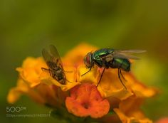 Hi Honey let me also something left - just two flies