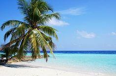 Maldiven, Zee, Blauw, Palm, Oceaan