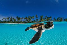 Beautiful pic of a sea turtle.