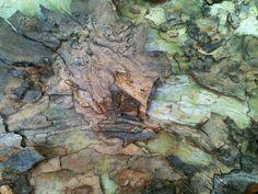 A selection of various bark textures from the OSU Botanic Garden.